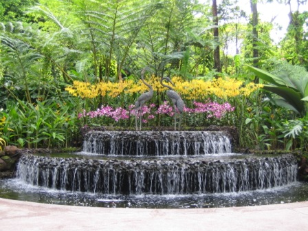 photo (85KB) : Figure 3 : Orchid Garden in the Singapore Botanic Gardens